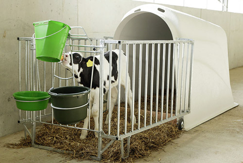 Individual calf hutch