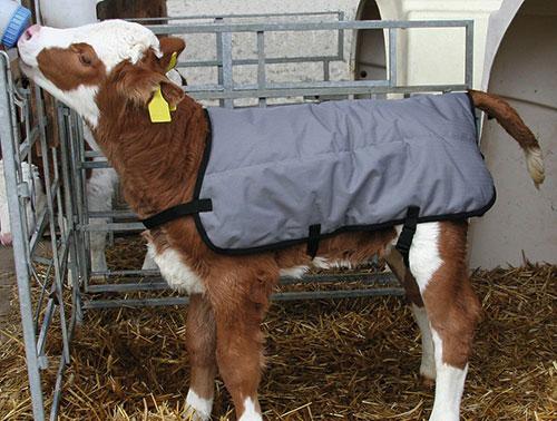 Calf jacket