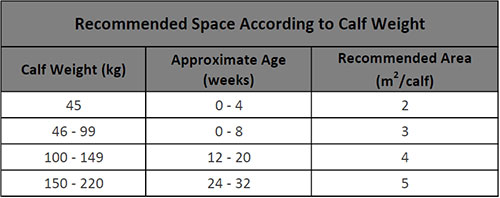 Space requirement for calf