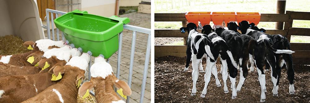 multi calf feeder